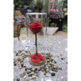 Forever Roses - Red