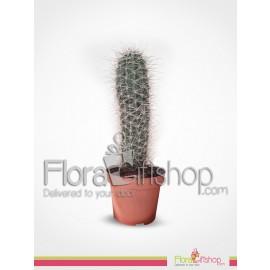 Cactus Plants1