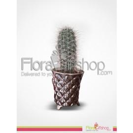 Cactus Plants2