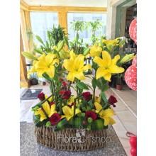 Yellow Magic Flowers